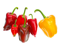 Yellow and red bell peppers Stock Images