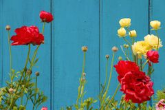 Yellow and red carnation flowers on flowerbed stock images