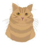 Yellow-red cat. Striped yellow-red cat with close eyes on white background Royalty Free Stock Photo