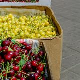 Yellow and red cherry in cardboard boxes. Blurred background. Stock Photo