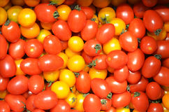 Yellow and red cherry tomatoes Royalty Free Stock Images