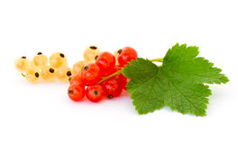 Yellow and red currant Stock Photo