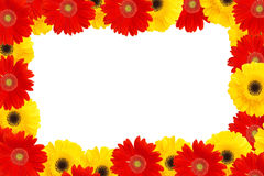 Yellow and red daisies Stock Images