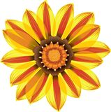 Yellow and Red Daisy Flower stock illustration