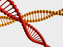 Yellow and red DNA chains on white Royalty Free Stock Photos