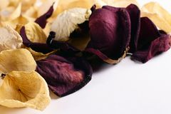 Yellow and red faded rose petals close up. Copy space royalty free stock photos