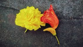Yellow and red flower wilted. On concrete floor stock photos