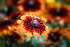 A yellow and red flower. With blur background Royalty Free Stock Photography