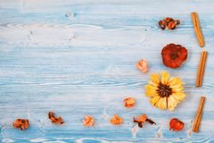Yellow and red flowers on a blue wooden background. Texture, background. Place for text Top view Concept for a postcard royalty free stock image