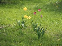 Yellow and red flowers in the field royalty free stock photography