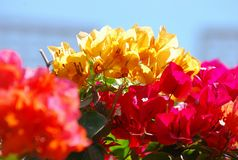 Yellow and red flowers Stock Photo