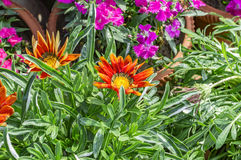 Yellow red flowers and others Royalty Free Stock Photos