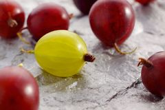 Yellow and red gooseberries Royalty Free Stock Images