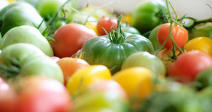 Yellow, red and green tomatoes Stock Photos