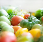 Yellow, red and green tomatoes Stock Photography