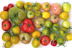 Yellow, red and green tomatoes Royalty Free Stock Images