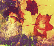 Yellow, red grunge collage autumn leafs background.  Royalty Free Stock Images