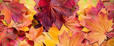 Yellow and red leaves. Autumn background. stock images