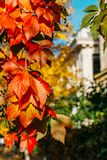 Yellow And Red Leaves In Autumn Stock Photography