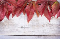 Yellow or red leaves with pine cone on white wooden grunge background. Royalty Free Stock Photo
