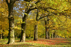 Yellow and red leaves on trees in autumn park Stock Photography