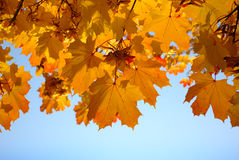 Yellow and red leaves on trees in autumn park Stock Images
