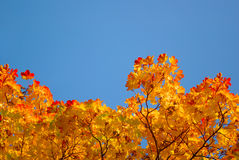 Yellow and red leaves on trees in autumn park Royalty Free Stock Photography