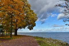 Yellow and red leaves trees by the sea royalty free stock photography