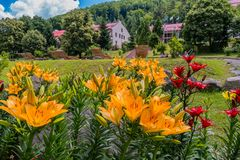 Yellow and red lilies in the foreground distract attention from houses and loungers in the background royalty free stock photos