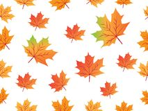 Yellow red maple leaf vector seamless pattern for wallpaper, background, cover, greeting card, fabric textile Stock Images