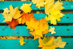 Yellow and red maple leaves on turquoise painted old wooden bench in public park. Blue bench in a public park with maple leaves on it. Autumn mood Royalty Free Stock Image