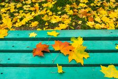 Yellow and red maple leaves on turquoise painted old wooden bench in public park. Blue bench in a public park with maple leaves on it. Autumn mood Stock Photo