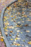 Yellow and red maple leaves on wet pavement Stock Photos