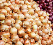 Yellow and red onion pile Stock Photos