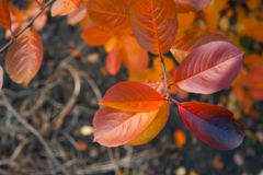 Yellow red orange bright autumn leaves. Autumn mood. stock image