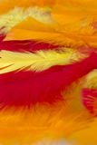 Yellow,Red and Orange craft feathers background Stock Photography