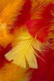 Yellow,Red and Orange craft feathers background Stock Images