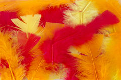 Yellow,Red and Orange craft feathers background Royalty Free Stock Image