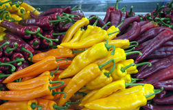 Yellow red and orange peppers Royalty Free Stock Images