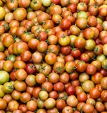 Yellow Red Orange Tomatoes stacked together. royalty free stock images