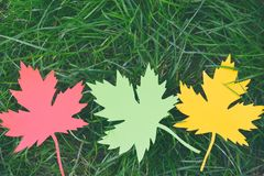Yellow and red paper maple leaf on green grass. Hello Autumn concept. Copy space. Yellow and red paper maple leaf on green grass. Hello Autumn concept. Copy royalty free stock images