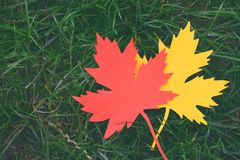 Yellow and red paper maple leaf on green grass. Hello Autumn concept. Copy space. Yellow and red paper maple leaf on green grass. Hello Autumn concept. Copy royalty free stock photo