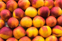 Yellow and red peaches Royalty Free Stock Photos