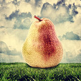 Yellow and red pear outdoor Royalty Free Stock Image