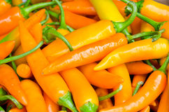Yellow red peppers Stock Image