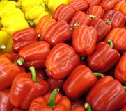Yellow and Red Peppers. Freshly picked peppers for salads and cooking royalty free stock photography