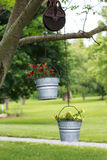 Yellow and Red Petunias in metal buckets. Red and Yellow Petunias in metal buckets hanging on a tree branch Stock Image