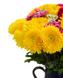 Yellow, red and pink  mum flowers Royalty Free Stock Photos
