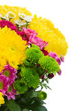 Yellow, red and pink  mum flowers Stock Photos