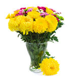 Yellow, red and pink  mum flowers Royalty Free Stock Photo